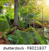 Summer forest with huge tree what grows on the rock - stock photo