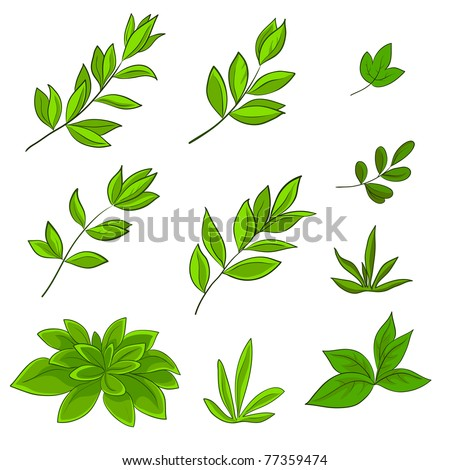Summer green leaves of various plants on a white background, set