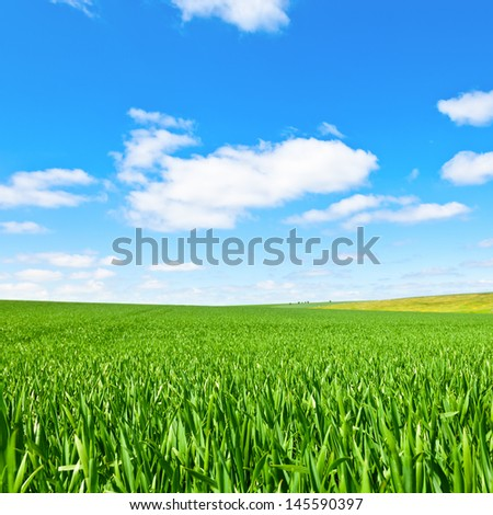 Summer landscape with green grass and blue sky