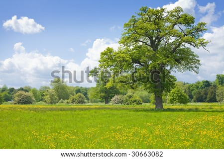 summer landscape with oak tree