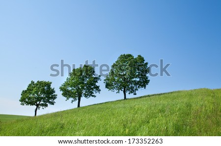 summer landscape young oaks on a flowering green meadow on a background clear blue sky on a sunny day