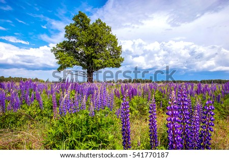 Summer nature scenery. Summer meadow of flower landscape