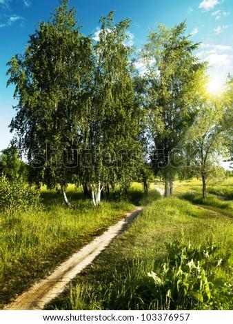 Plantation Mango Trees Stock Photo 107975750 Shutterstock