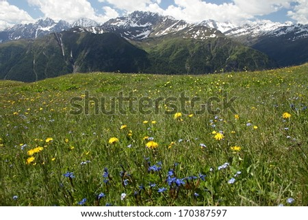 Summer time, meadow below the mountain by name Alp  at middle Europe in Austria,