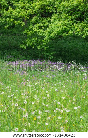 Summery floral meadow in the woods