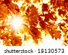 Sun beams and autumn leaves - stock photo