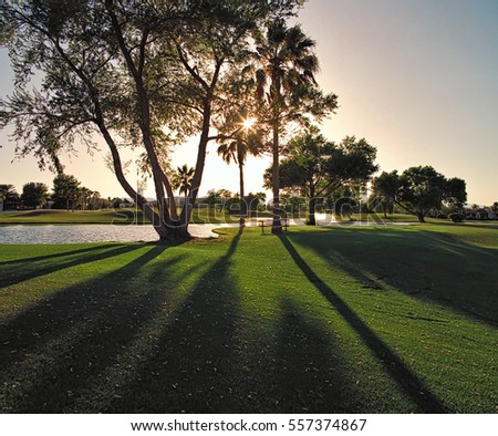 Sun casting shadows through the trees on a golf course