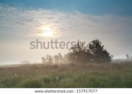 sun over misty swamp in early morning, Fochteloerveen, Netherlands