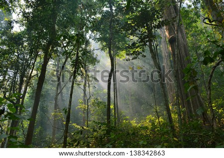 sun rays pushing through a green forest