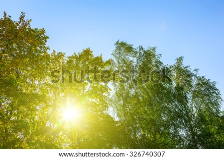 Sun Shining Through Colorful Branches of Tree in Autumn Season