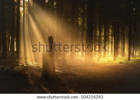 Sunbeam in the fog