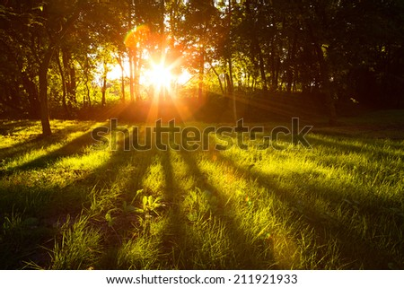 Sunlight green forest at sunset in summer time with lens flare