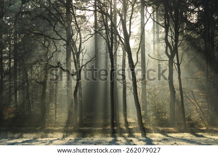 Sunlight shining through a foggy forest at spring.