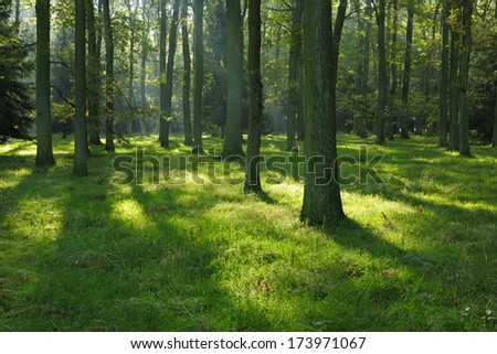 Sunlit Oak Tree Forest