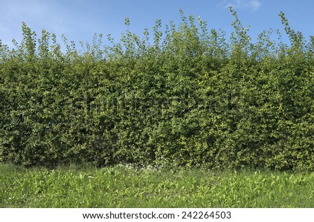 Sunny day. Bushes on blue sky background