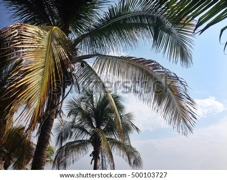 Sunny weather on the beach and palm leaves