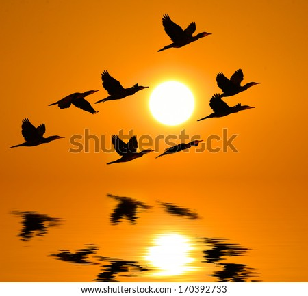 Sunrise and dark clouds Shadow of cormorant bird  flying to the sun reflected in water