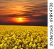 sunrise over rapeseed field - stock photo