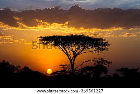 Sunset and Acacia tree in the Serengeti, Tanzania