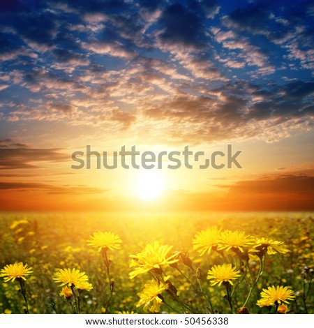 Sunset and flower field.