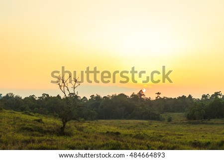 Sunset at grassland area of Khao Yai national park, Thailand.