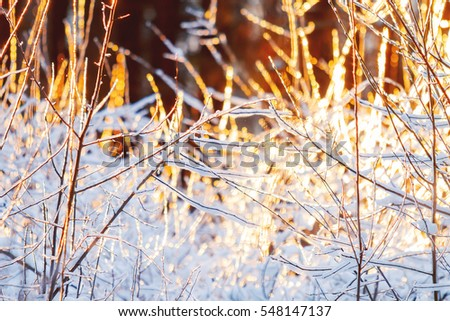 Sunset in winter forest. Sunlight among trees. Natural seasonal background.