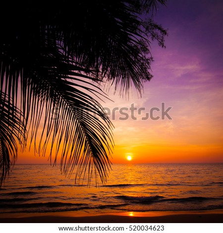 sunset landscape. beach sunset.  sunset on the beach
