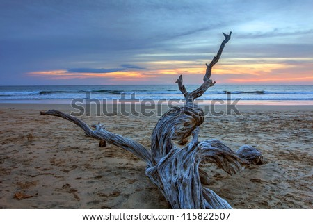 Sunset landscape with dry wood on the sandy surfing beach of Playa Avallena in Guanacaste region of Costa Rica.