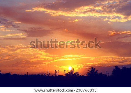 Sunset of silhouette palm tree with sky cloud, nature background vintage color toned