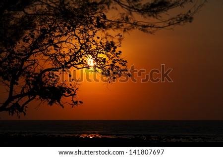Sunset on the ocean - the sun is shining through the trees