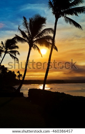 Sunset Palm Trees silhouetted on Maui Hawaii with the Pacific Ocean