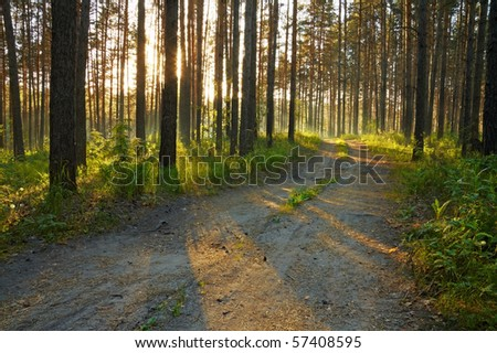 sunset, road in the woods