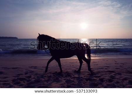 Sunset with Horse on the Beach