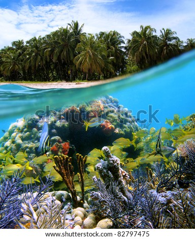 Surface and underwater view of a tropical beach with coconut trees and corals with shoal of fish, Caribbean sea, Zapatillas islands, Panama