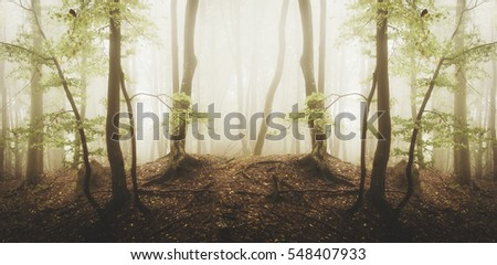 Surreal symmetrical forest. Panoramic landscape with trees, fog, mist, and sunlight in green woods