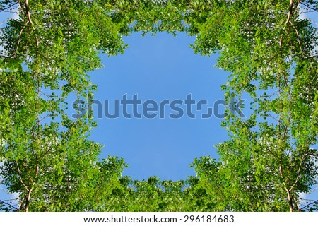 surrounded trees against a beautiful clear sky