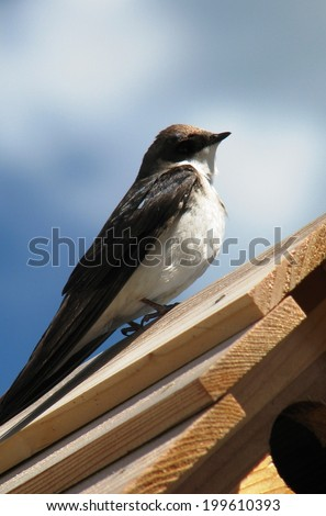 swallow bird perched on birdhouse