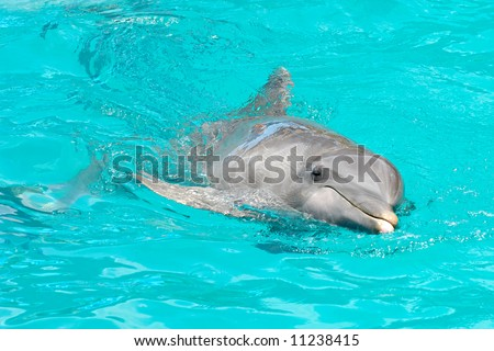 Sweet dolphin is swimming in the water