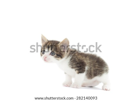 sweet kitten on a white background