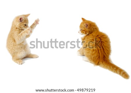 Sweet kittens are just about to fight on a white background.