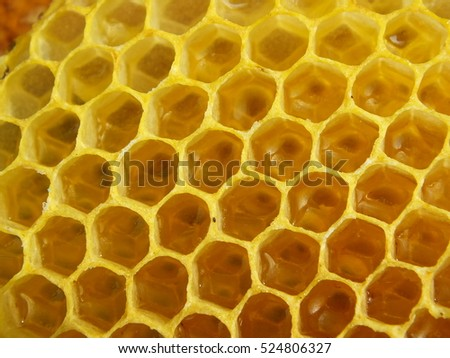 Sweet texture. Honeycomb with honey