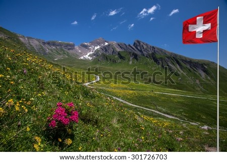 Swiss beauty, floriferous way to  Schwarzhorn mount