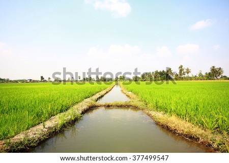 Symmetric image of water canal through the paddy field