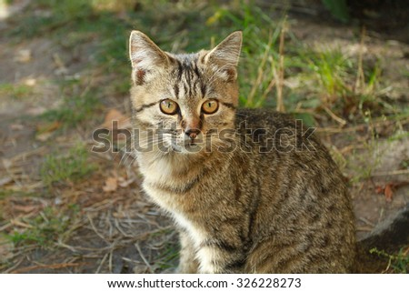 Tabby kitten on summer background looking at the camera. It can be used for the cover of the magazine, brochure, notebook, poster, postcard, album of your choice