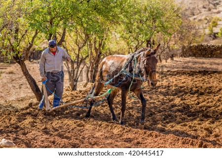 TALIOUINE, MOROCCO - OCTOBER 26, 2015: Farmer working a small plot of land near the town of Taliouine in the Anti-Atlas mountains.