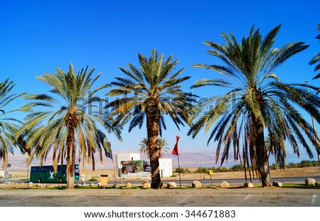 tall palm trees on a green lawn in Israel