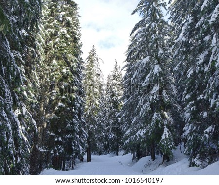 Image result for beautiful deep in woods photo with snow