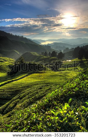 Tea plantation at the Cameron Highland, Malaysia