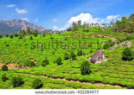 Tea Plantation Munnar Kerala State India Stock Photo ...