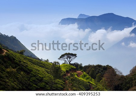 Tea plantations in Munnar, Kerala, South India. Munnar is situated at around 1,600 meters above sea level in the Western Ghats range of mountains.